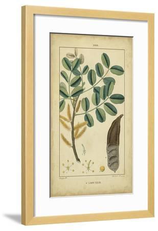 Vintage Turpin Botanical VII-Turpin-Framed Art Print