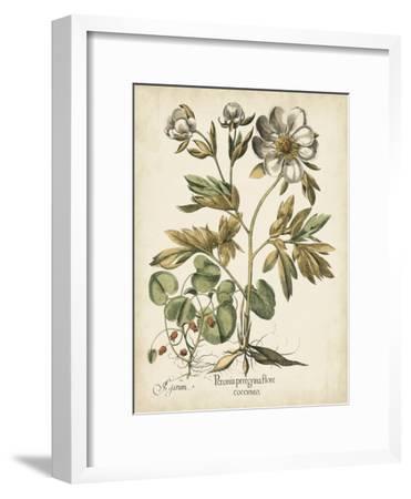 Ivory Peonies III-Besler Basilius-Framed Art Print