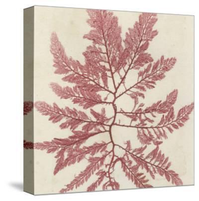Brilliant Seaweed I--Stretched Canvas Print