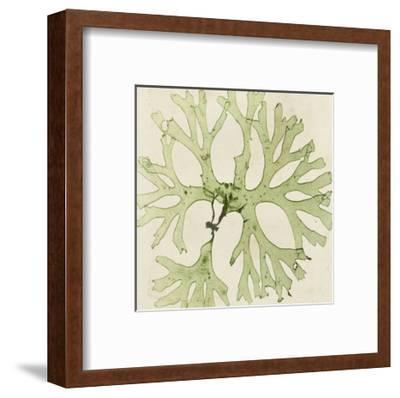 Brilliant Seaweed III--Framed Art Print