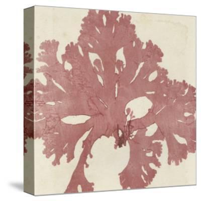Brilliant Seaweed V--Stretched Canvas Print