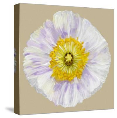 Poppy Blossom IV-Alicia Ludwig-Stretched Canvas Print