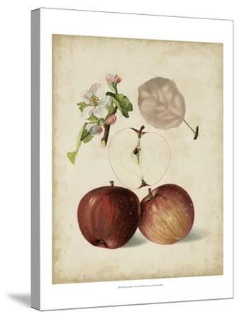 Harvest Apples I-Heinrich Pfeiffer-Stretched Canvas Print