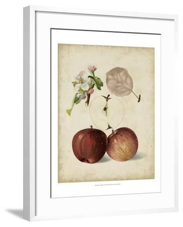 Harvest Apples I-Heinrich Pfeiffer-Framed Art Print