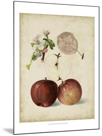 Harvest Apples I-Heinrich Pfeiffer-Mounted Art Print