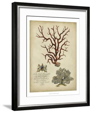 Imperial Coral IV--Framed Art Print