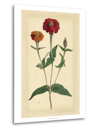 Floral Varieties III-Samuel Curtis-Metal Print