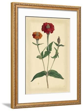 Floral Varieties III-Samuel Curtis-Framed Art Print