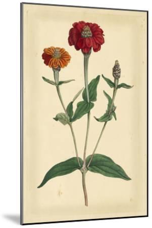 Floral Varieties III-Samuel Curtis-Mounted Art Print