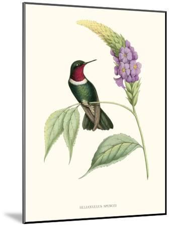 Hummingbird and Bloom II-Mulsant & Verreaux-Mounted Art Print