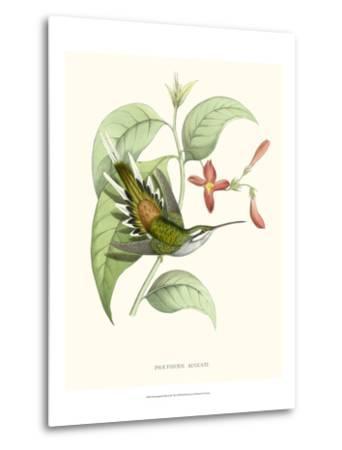 Hummingbird and Bloom III-Mulsant & Verreaux-Metal Print