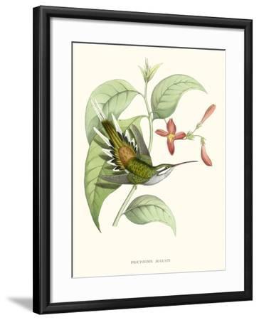 Hummingbird and Bloom III-Mulsant & Verreaux-Framed Art Print