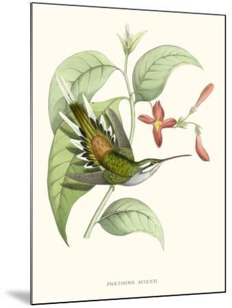 Hummingbird and Bloom III-Mulsant & Verreaux-Mounted Art Print