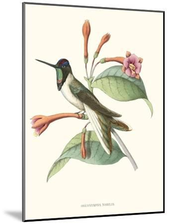 Hummingbird and Bloom IV- Mulsant-Mounted Art Print