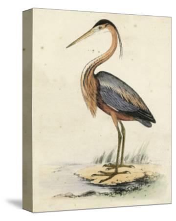 Antique Heron II--Stretched Canvas Print