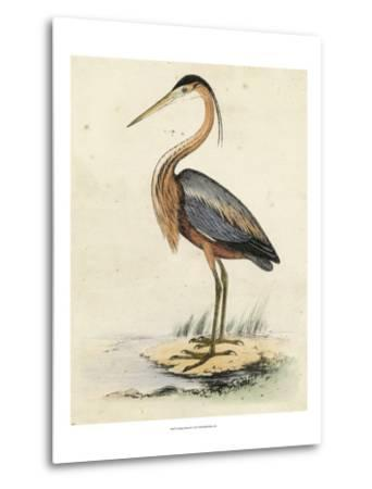 Antique Heron II--Metal Print