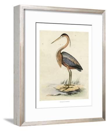 Antique Heron II--Framed Art Print