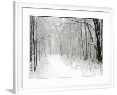 Trees Line a Snow-Covered Road Through a Forest-Amy & Al White & Petteway-Framed Photographic Print