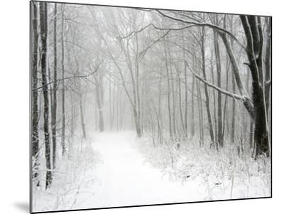 Trees Line a Snow-Covered Road Through a Forest-Amy & Al White & Petteway-Mounted Photographic Print