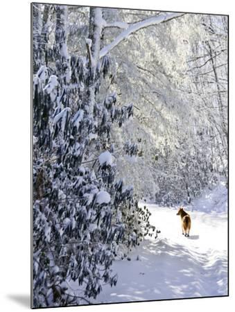 A Pet Dog Walking Up a Snow-Covered Road-Amy & Al White & Petteway-Mounted Photographic Print