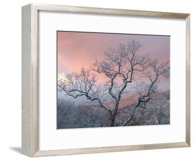 A Pink Dawn and Frosty Trees in the Blue Ridge Mountains-Amy & Al White & Petteway-Framed Photographic Print