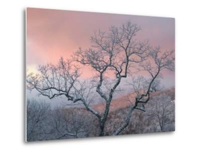 A Pink Dawn and Frosty Trees in the Blue Ridge Mountains-Amy & Al White & Petteway-Metal Print
