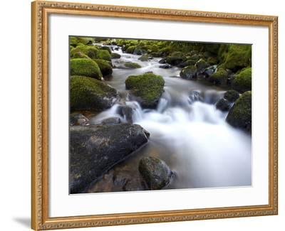 River Teign, Dartmoor National Park, Devon, England, United Kingdom, Europe-Jeremy Lightfoot-Framed Photographic Print
