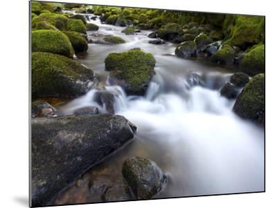 River Teign, Dartmoor National Park, Devon, England, United Kingdom, Europe-Jeremy Lightfoot-Mounted Photographic Print