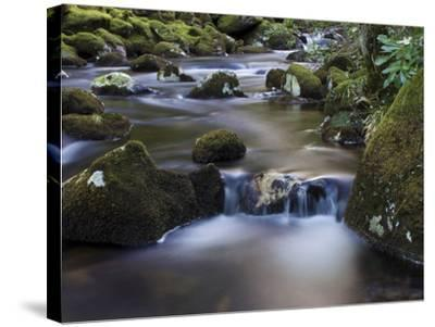 River Teign, Dartmoor National Park, Devon, England, United Kingdom, Europe-Jeremy Lightfoot-Stretched Canvas Print
