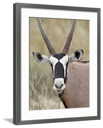 Gemsbok (South African Oryx) (Oryx Gazella), Kgalagadi Transfrontier Park, Encompassing the Former -James Hager-Framed Photographic Print