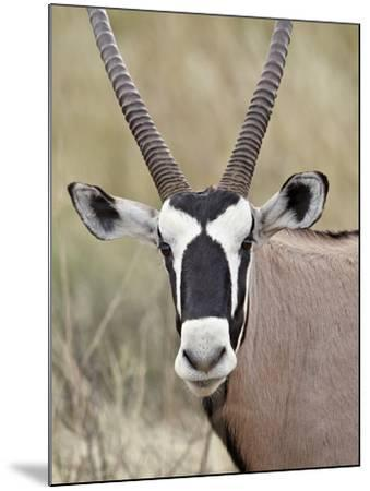 Gemsbok (South African Oryx) (Oryx Gazella), Kgalagadi Transfrontier Park, Encompassing the Former -James Hager-Mounted Photographic Print