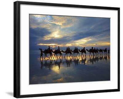 Tourist Camel Train on Cable Beach at Sunset, Broome, Kimberley Region, Western Australia-David Wall-Framed Photographic Print