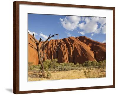 Desert Oak Tree and Spinifex Grass at Red Rock Base of Ayers Rock, Northern Territory, Australia-Paul Souders-Framed Photographic Print