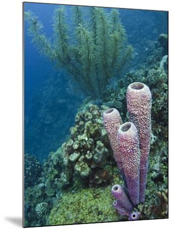Stove-Pipe Sponge (Aplysina Archeri), Bonaire, Netherlands Antilles, Caribbean-Pete Oxford-Mounted Photographic Print