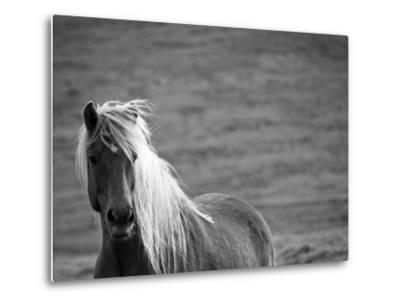 Islandic Horse with Flowing Light Colored Mane, Iceland-Joan Loeken-Metal Print