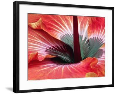 Close-Up of Hibiscus Flower-Adam Jones-Framed Photographic Print