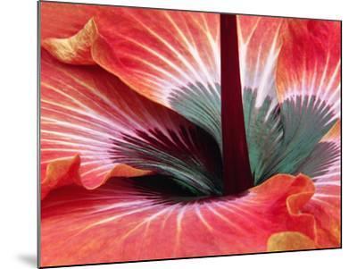Close-Up of Hibiscus Flower-Adam Jones-Mounted Photographic Print