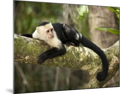 White Faced Capuchin (Cebus Capucinus), Manuel Antonio National Park, Costa Rica-Paul Souders-Mounted Photographic Print
