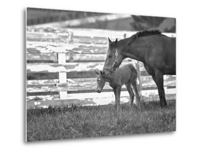Female Thoroughbred and Foal, Donamire Horse Farm, Lexington, Kentucky-Adam Jones-Metal Print