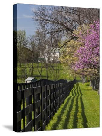 Fence and Dogwood and Redbud Trees in Early Spring, Lexington, Kentucky, Usa-Adam Jones-Stretched Canvas Print
