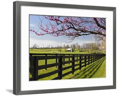 Redbud Trees in Full Bloom, Lexington, Kentucky, Usa-Adam Jones-Framed Photographic Print