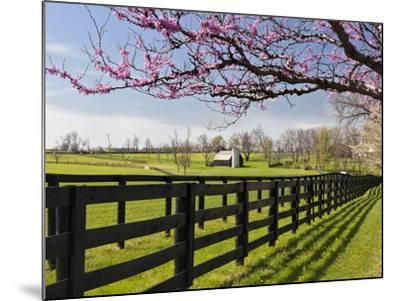 Redbud Trees in Full Bloom, Lexington, Kentucky, Usa-Adam Jones-Mounted Photographic Print