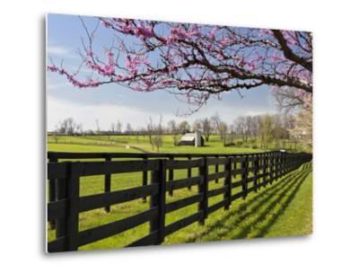 Redbud Trees in Full Bloom, Lexington, Kentucky, Usa-Adam Jones-Metal Print