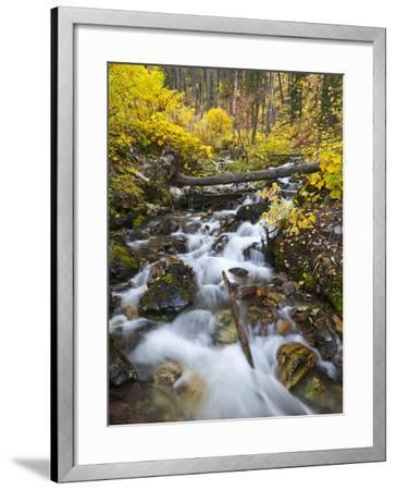 Hellroaring Creek Decked Out in Autumn Color Near Whitefish, Montana, Usa-Chuck Haney-Framed Photographic Print