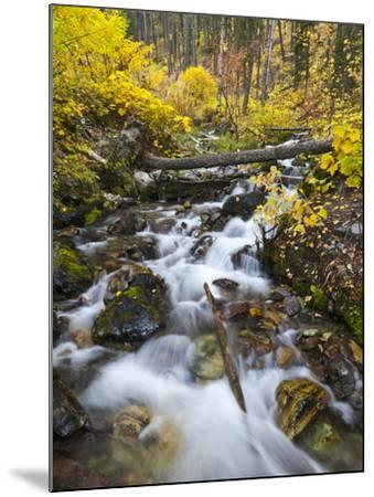 Hellroaring Creek Decked Out in Autumn Color Near Whitefish, Montana, Usa-Chuck Haney-Mounted Photographic Print