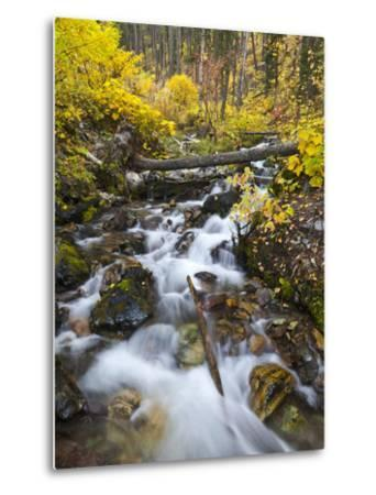 Hellroaring Creek Decked Out in Autumn Color Near Whitefish, Montana, Usa-Chuck Haney-Metal Print