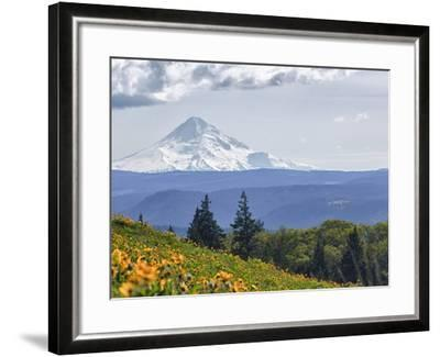Mt. Hood from Mccall Point, Tom Mccall Nature Preserve, Columbia Gorge, Oregon, Usa-Rick A^ Brown-Framed Photographic Print