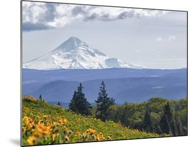 Mt. Hood from Mccall Point, Tom Mccall Nature Preserve, Columbia Gorge, Oregon, Usa-Rick A^ Brown-Mounted Photographic Print