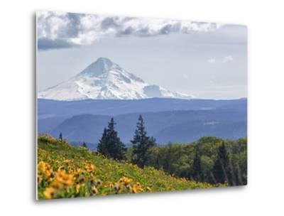 Mt. Hood from Mccall Point, Tom Mccall Nature Preserve, Columbia Gorge, Oregon, Usa-Rick A^ Brown-Metal Print