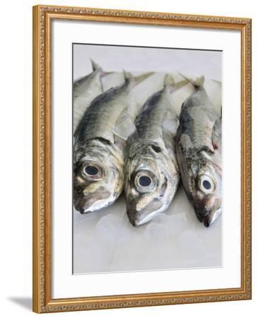 Mackerel-Mauricio Abreu-Framed Photographic Print